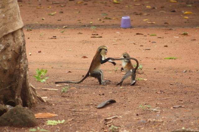 Monkey Twist